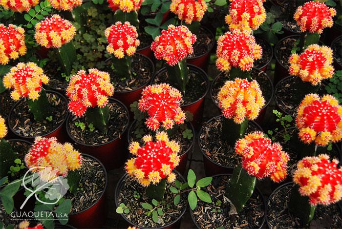Rojo-y-Amarillo