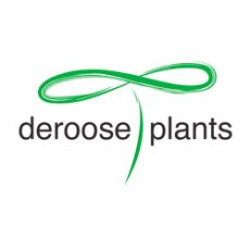 droose-plants