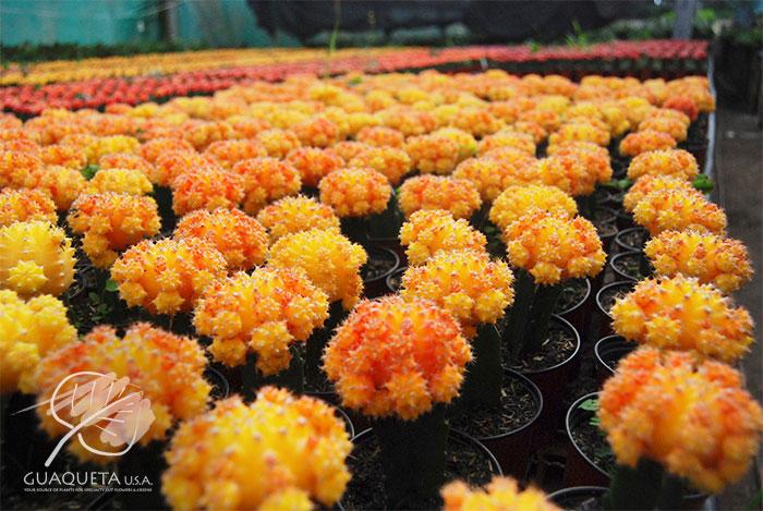 Naranja-amarillo